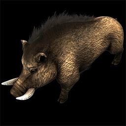 Age of Empires 2: Definite Edition boar